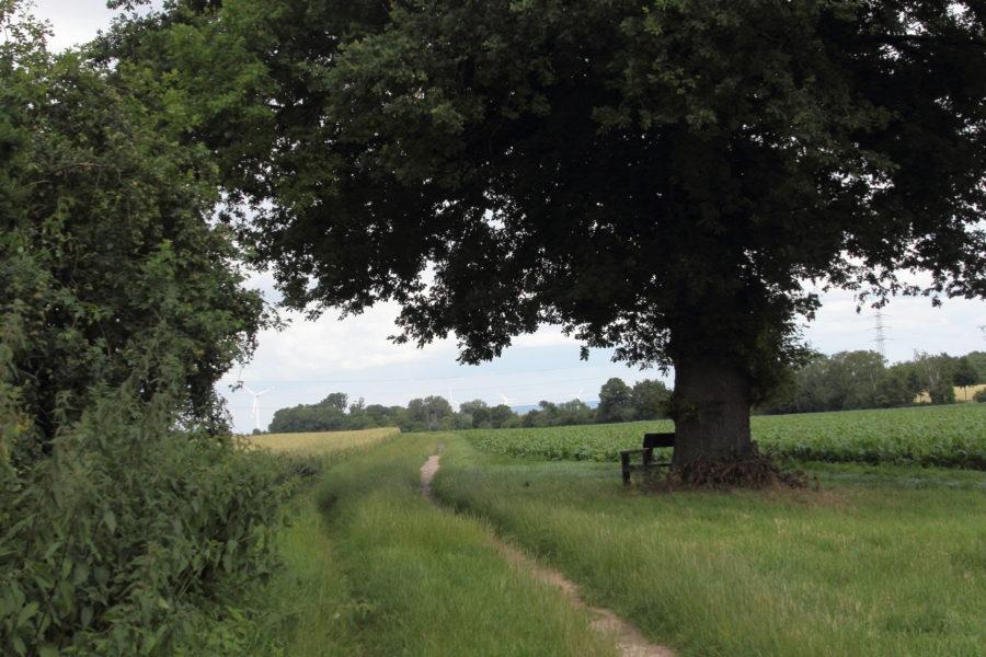 Radweg St. Jöris Kinzweiler
